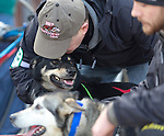 An excited sled dog is held by a handler at the ceremenial start of the 43rd Annual Iditarod in Anchorage, Alaska. The 1000 mile dog sled race usually restarts in Willow, Alaska, and finishes in Nome. Poor snowfall, however, forced the restart north to Fairbanks.