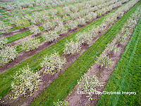 63801-11908 Apple orchard in spring-aerial  Marion Co. IL