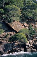 Europe/Provence-Alpes-Côte d'Azur/83/Var/Rayol-Canadel-sur-Mer: Jardin du domaine du Rayol - Détail pins maritimes et côte rocheuse au conservatoire du littoral