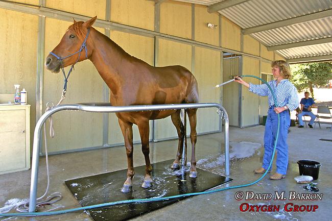 Evelyn Hanggi Washing Horse