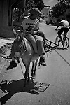 Two Palestinian boys are passed by a cyclist as they ride a donkey through the streets of Nahhalin on 29/05/2010.