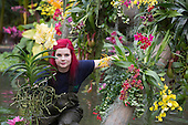 "London, UK. 6 February 2014. Picture: Display Horticulturalist Eli Biondi at work. The annual orchids festival at the Royal Botanic Gardens, Kew, takes centre stage in the Princess of Wales Conservatory from 8 February to 9 March 2014. This year's theme is ""Orchids: A Plant Hunters' Paradise"". More than 6500 orchids of the Phalaenopsis, Vanda and Cambria hybrids have been worked into colourful displays by a team of 20 people which took 4 weeks to build."