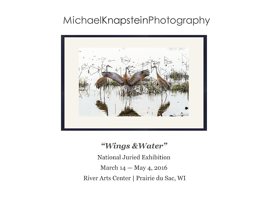 """Sandhill Crane Dance"" by Michael Knapstein was selected for the national juried exhibition ""Wings & Water"" and will be exhibited at the River Arts Center in Prairie du Sac, Wisconsin."