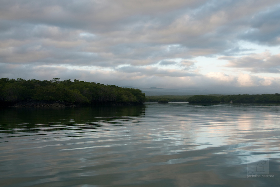 early morning in black turtle cove, santa cruz Galapagos