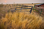 Wallowa County, Oregon:<br /> Dried grasses and crubmliing fenceline with sunrising in a smoke filled sky