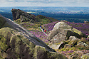 01/09/15<br /> <br /> Surrounded by stunning autumn heather, a family search for wild bilberries on Ramshaw Rocks in The Staffordshire Peak District near Leek.<br /> <br /> As you travel along the road below The Winking Man another rock passes in front of the rock formation making its eye appear to wink.<br /> <br /> All Rights Reserved: F Stop Press Ltd. +44(0)1335 418629   www.fstoppress.com.