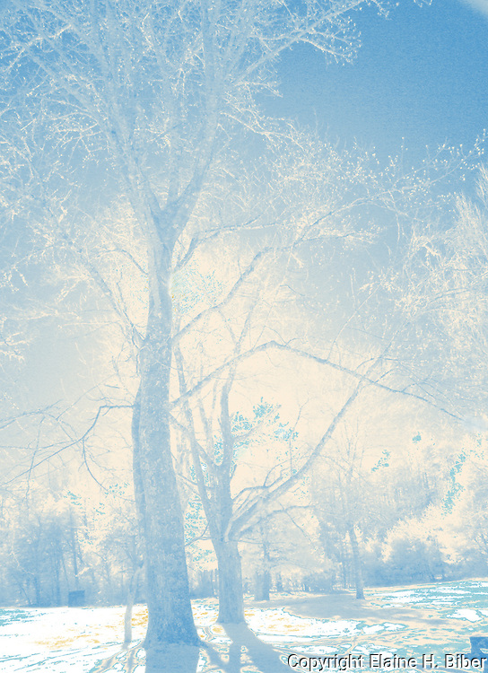 Winter infrared magical trees in Cades Cove, Tenn.