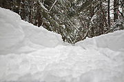 Fresh snowshoe tracks in forest after a dusting of snow in Lincoln, New Hampshire USA