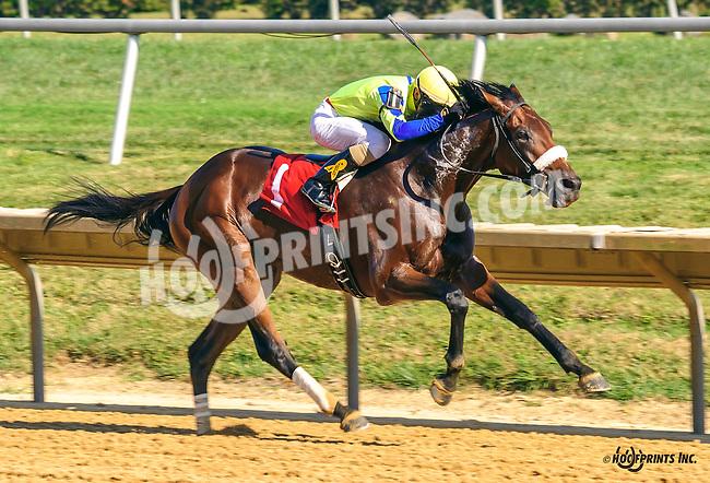 Supah Czech winning at Delaware Park on 9/12/16
