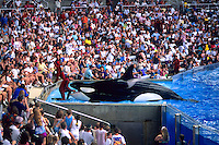 The Shamu Show at Sea World in Orlando Florida