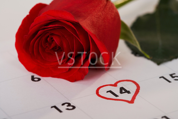 Red rose lying on calendar with 14th February marked with heart shape