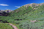 July 26, 2016 - Aspen, Colorado, U.S. -  A picture perfect Colorado day during the height of wildflower season along the Lost Man Trail in the Hunter-Fryingpan Wilderness Area near Aspen, Colorado.