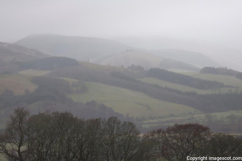 Winter mist, Tweed Valley Forest Park, Scottish Borders