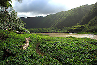 Hawaii, South Pacific.  Verdant river valley.
