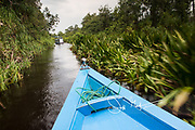 Klotok river boats navigate the Sekonyer river in Southern Borneo along the Tanjung Puting National Park, Indonesia.