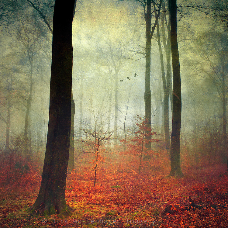 Autumnly forest on a rainy &amp; misty day. Texturized photograph.<br /> <br /> Prints &amp; more:http://society6.com/DirkWuestenhagenImagery/days-go-by-k7d_Print