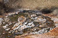 Grassy Spring at Mammoth Hot Springs.  Yellowstone National Park, Wyoming, USA.