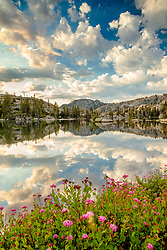 """Wildflowers at Paradise Lake 3"" - Photograph of wildflowers and puffy clouds in the early morning at Paradise Lake."
