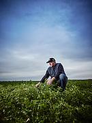 Dairy farmer out in his alfalfa field shot as a Environmental Portraiture on a PhaseOne IQ180