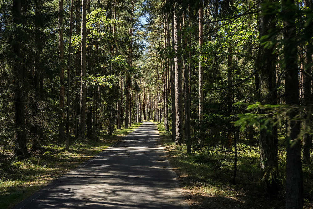 A bicycle path on Sunday, September 18, 2016 in Belozhevskaya Pushcha National Park near Kamieniuki, Belarus.