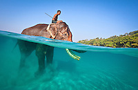 Over under shot of Rajan and his mahout riding him.