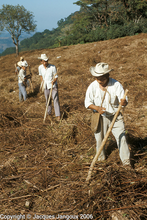 Mexico, Puebla State, Sierra de Puebla: Mexican Indian men sowing maize using digging sticks.