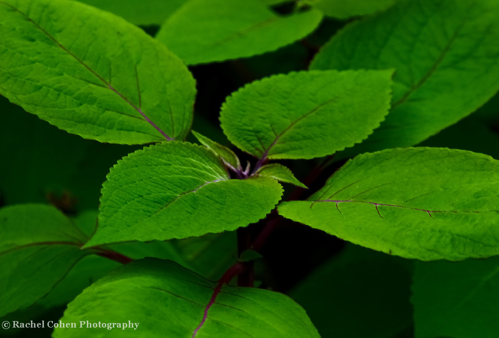 &quot;Green Sleeves&quot;<br />