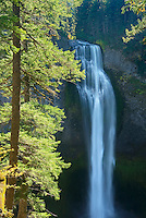 Salt Creek Falls, Willamette National Forest Oregon