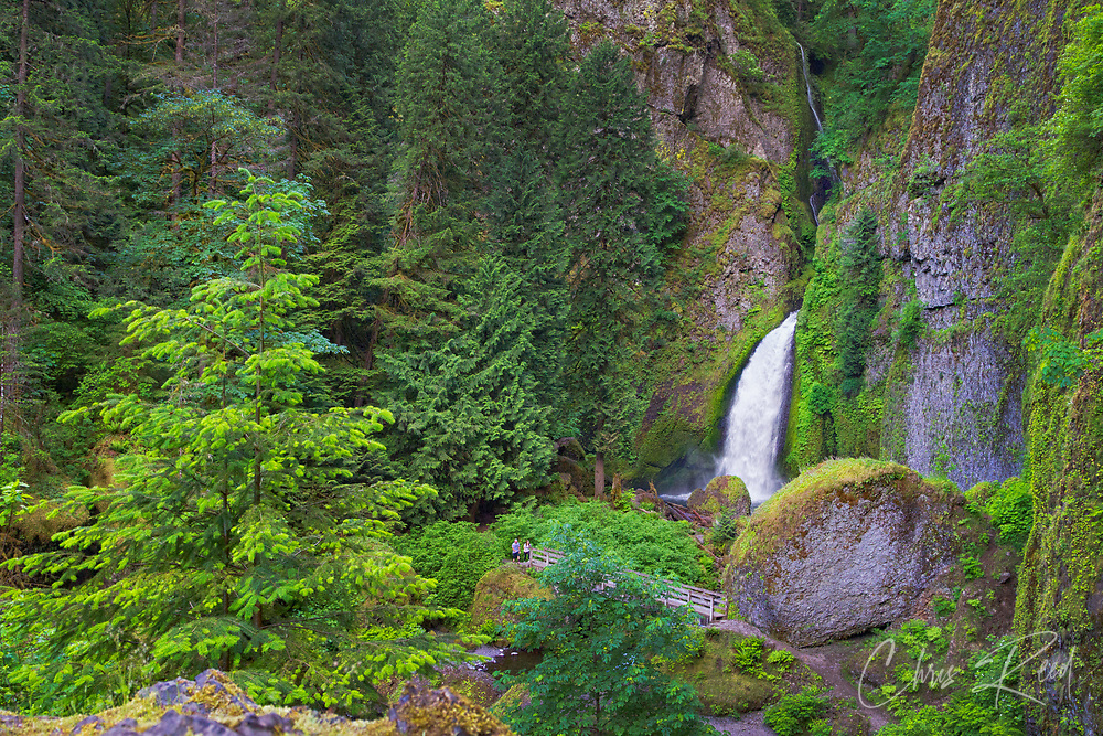 USA, Oregon, Multnomah County. Wahclella Falls on Tanner Creek in the Columbia River Gorge.