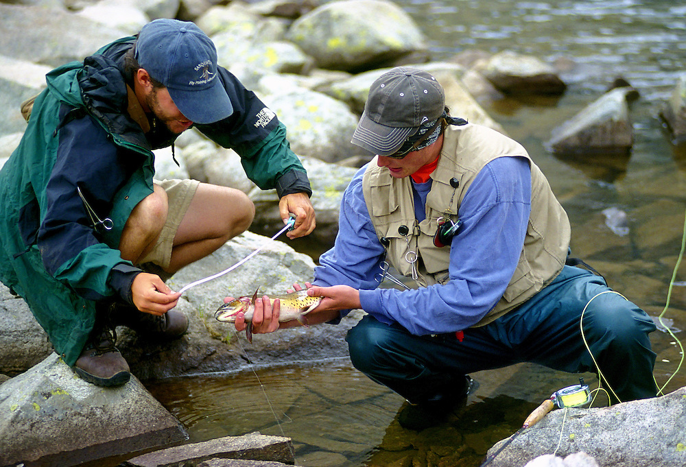 Fly fishermen measure a Cutthroat Trout before releasing it back to the wild in the Colorado Rocky Mountains.