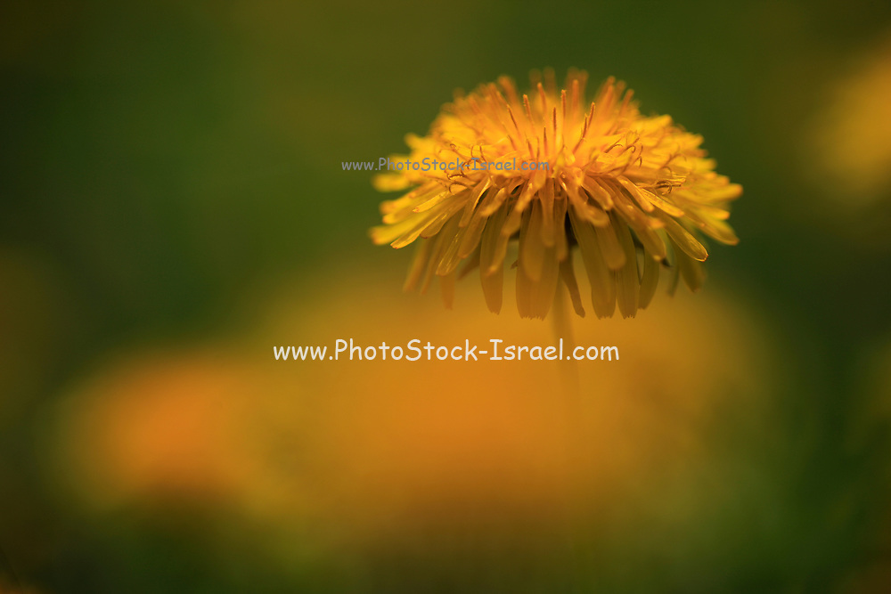 Close up of an orange flower in a green field