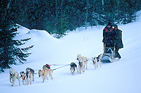 Canada, Province du Quebec, Traineau a chiens. // Canada, Quebec province, Sled Dogs