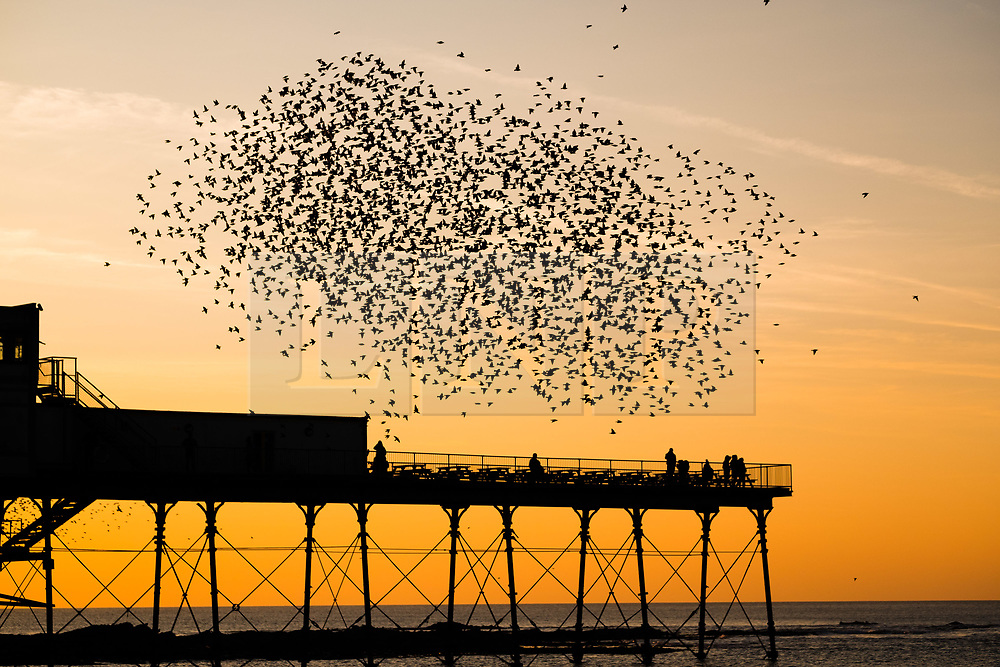 © Licensed to London News Pictures. 24/02/2018. Aberystwyth, UK. As the sun sets over Cardigan Bay on  a bitterly cold February evening in Aberystwyth,  people standing on the end of the pier are surrounded by tens of thousands of tiny starlings as they come swooping in from their feeding grounds in the fields and farms  to  roost for the night on the forest of cast iron girders and beams underneath the Victorian era seaside attraction. Photo credit: Keith Morris/LNP