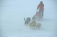 MN631 Sledge dog