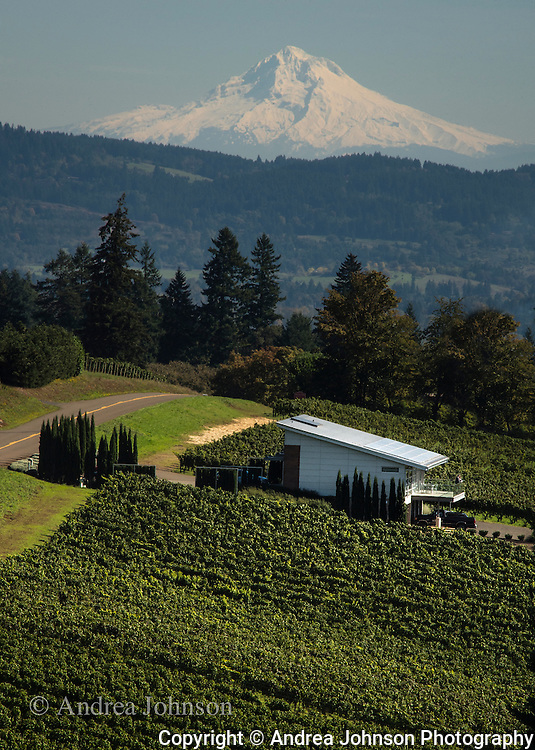 Winderlea winery & vineyards, Dundee Hills, Willamette Valley, Oregon