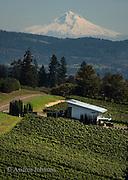 Winderlea winery & vineyards, Dundee Hills, Willamette Valley, Oregon