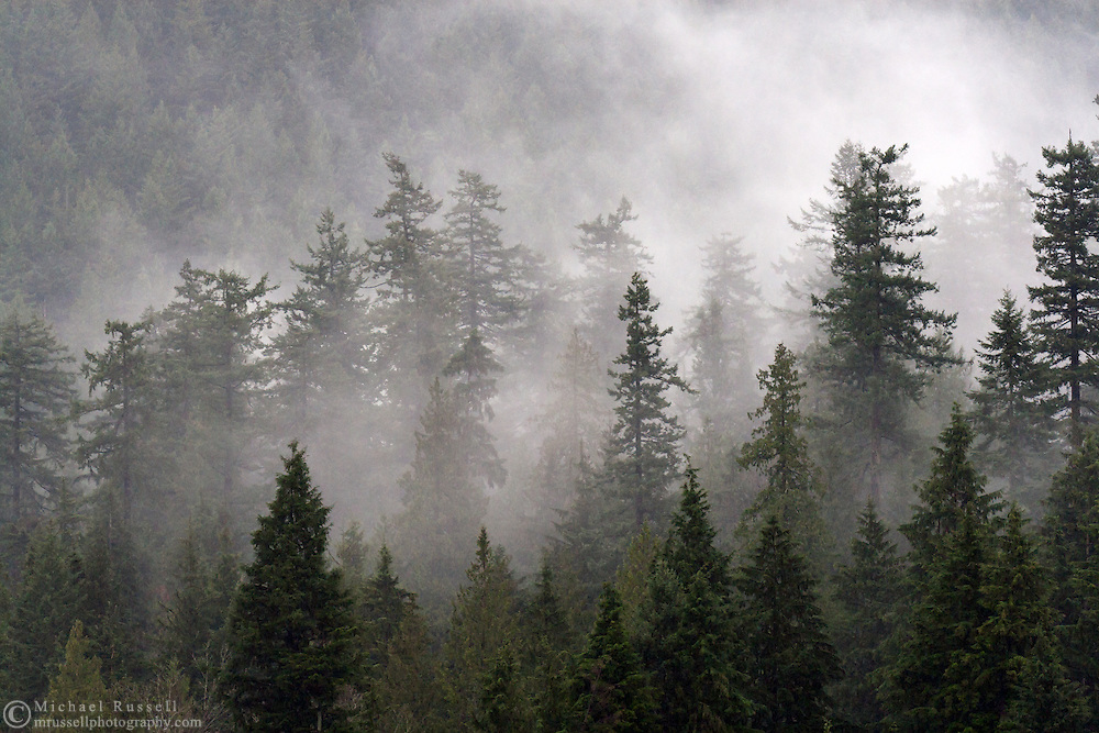 Clouds swirl around the treetops in Belcarra Regional Park near Barnet Inlet.  Photographed from Barnet Marine Park in Burnaby, British Columbia, Canada.