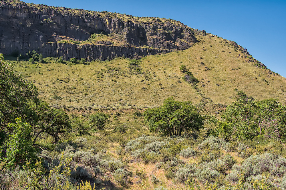 Volcanic basalt cliffs, steep slopes and sagebrush steppe pretty much define Central Washington's White Pass. Springtime turns the typical brown desert landscape into a green paradise attracting a plethora of wildlife to the region.