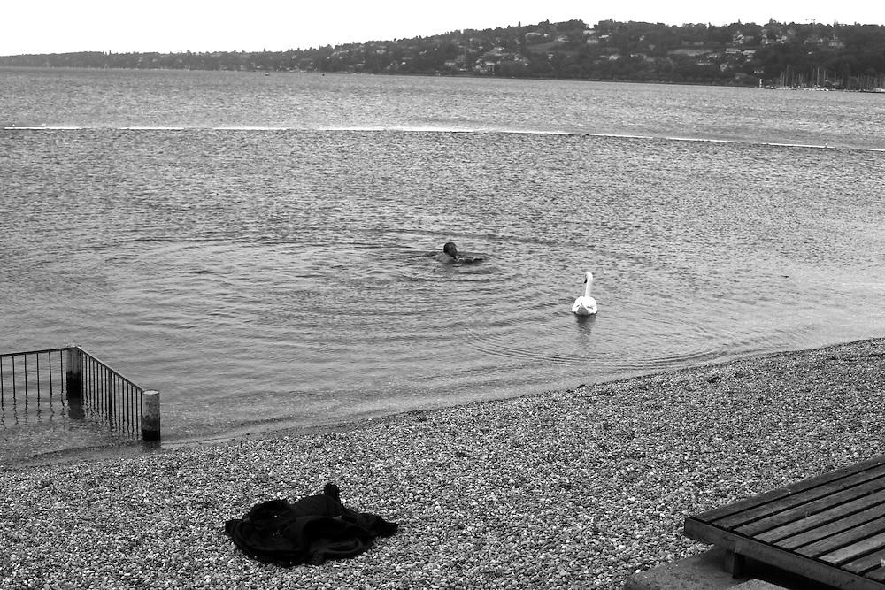 Man and swan, Geneva