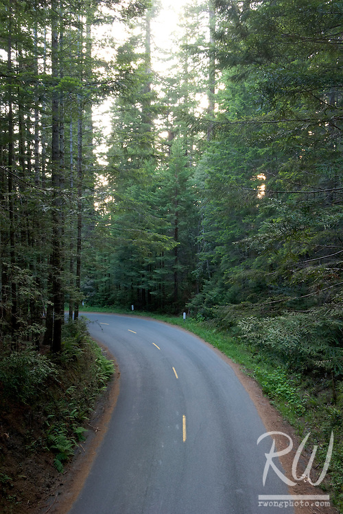 Road in Old-Growth Coast Redwood Forest, Redwood National Park, California