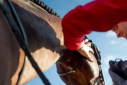 Philippaerts Olivier, (BEL), H&M Armstrong van de Kapel,<br /> Furusiyya FEI Nations Cup of Belgium<br /> Longines Spring Classic of Flanders - Lummen 2015<br /> © Hippo Foto - Dirk Caremans<br /> 01/05/15