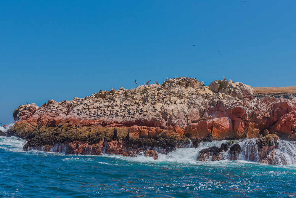 A flock of birds on an island wildlife reserve in the Pacific Ocean. Waves are crashing against the rocks.