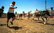05 MAY 2002 - SCOTTSDALE, ARIZONA, USA: People participating in the 1st Annual Running of the Bulls at Rawhide in Scottsdale, Arizona, run the course with bulls in pursuit, Sunday, May 5, 2002. The event was a part of a Cinco de Mayo celebration. About 400  people paid up to $80 each to run with the bulls. The event was fashioned after the running of the bulls in Pamplona, Spain. .PHOTO BY JACK KURTZ
