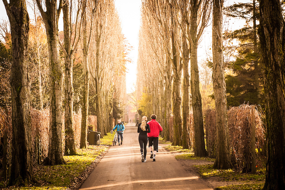 People running through Copenhagen's Assistens Kirkegård - the burial place of Hans Christian Andersen - during winter in Denmark