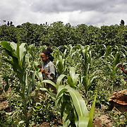 Girls run through a maize and coffee plantation in Yirgacheffe, famous for its coffee.