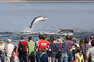 Visitors on Chanonry Point watching bottlenose dolphins breach in Moray Firth.