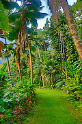 Botanical garden, Waipio Valley, Big Island of Hawaii