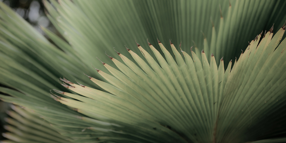 Design motif of a fan palm