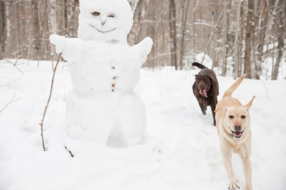 Two Labs chasing each other past a snowman