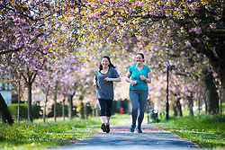 © Licensed to London News Pictures. 17/05/2016. Harrogate UK. Two ladies run through the Cherry blossom tree's on the Stray in Harrogate today as Yorkshire see's another fine weather day. Photo credit: Andrew McCaren/LNP